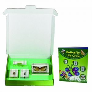 BIOLOGY FOR KIDS - BUTTERFLY