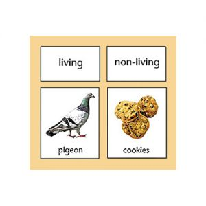 Living/Non-Living Classification