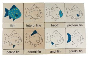 Three Part Cards - Fish