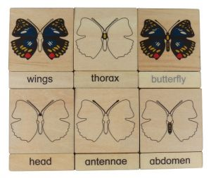 Three Part Cards - Butterfly