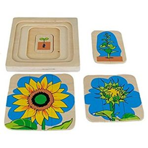 Wooden Sunflower Life Cycle Puzzle