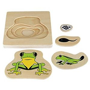 Wooden Frog Life Cycle Puzzle