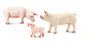 Pig, sow and piglet