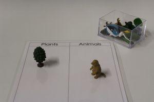 Plant Animal Classification